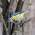 Накормите птиц зимой