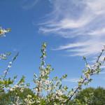 Календарь работ в саду и огороде в мае