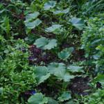Жидкие зеленые удобрения — конец компостной бочке