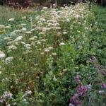 Сад-огород: урожай 2017